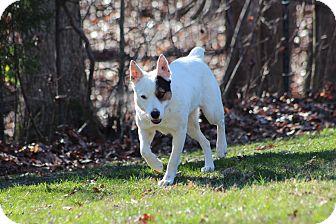 Australian Cattle Dog Mix Dog for adoption in Prince Frederick, Maryland - Rayne