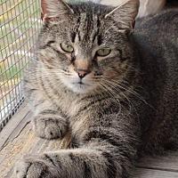 Adopt A Pet :: Bander - Freeport, FL