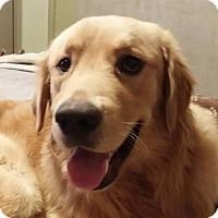 Adopt A Pet :: Preston #0495 - Fort Worth, TX