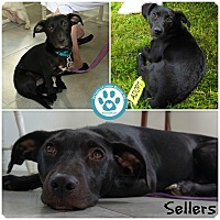 Adopt A Pet :: Sellers - Kimberton, PA