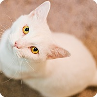 Adopt A Pet :: Snow - Cedar Springs, MI