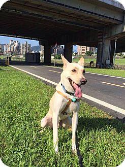 Shepherd (Unknown Type) Mix Dog for adoption in Sunnyvale, California - Arno