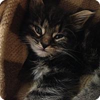 Adopt A Pet :: Sigmund - River Edge, NJ