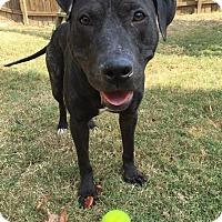 Adopt A Pet :: Remi - Atlanta, GA