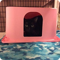 Adopt A Pet :: Sif - Janesville, WI