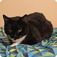 Adopt A Pet :: Electra - Corona, CA