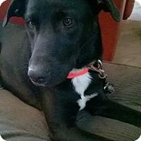 Adopt A Pet :: Jagger - Cincinnati, OH