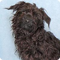 Adopt A Pet :: Packard - Encinitas, CA