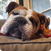 Adopt A Pet :: Penelop - Decatur, IL