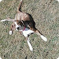 Adopt A Pet :: Sasha - Austin, AR