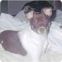 Adopt A Pet :: Abby - Kingwood, TX