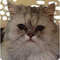 Adopt A Pet :: Raven - Beverly Hills, CA