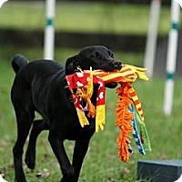 Adopt A Pet :: Inky - Richmond, VA