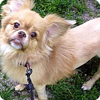 Adopt A Pet :: Toby - Coral Springs, FL