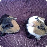 Adopt A Pet :: Peanut Butter - San Antonio, TX