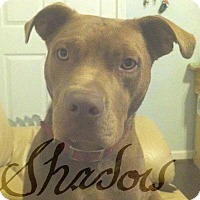 Adopt A Pet :: Shadow - New Orleans, LA