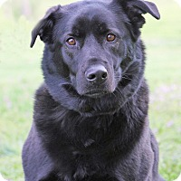 Adopt A Pet :: Shadow - Hillsboro, IL