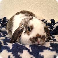 Adopt A Pet :: Elliot - Watauga, TX
