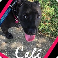Adopt A Pet :: Cali - Huntington Beach, CA