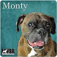 Adopt A Pet :: Monty - Woodinville, WA