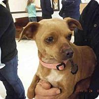 Adopt A Pet :: PRINCESS - Oroville, CA