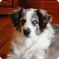 Adopt A Pet :: Topanga - Elk River, MN