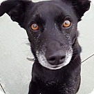 Adopt A Pet :: Squire