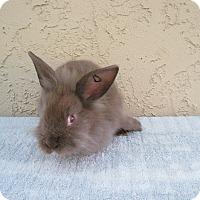 Adopt A Pet :: Coco - Bonita, CA