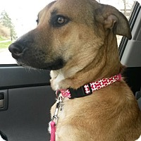 Adopt A Pet :: Liberti~ADOPTED! - Davenport, IA