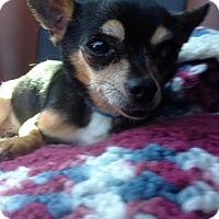 Adopt A Pet :: Rexy - Las Vegas, NV