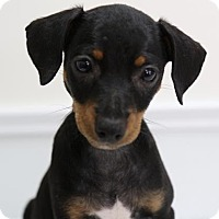 Adopt A Pet :: Winston - Picayune, MS