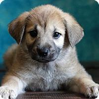 Adopt A Pet :: Jessica - Waldorf, MD