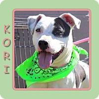 Adopt A Pet :: KORI - Dallas, NC