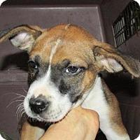 Adopt A Pet :: Patterson - Rocky Mount, NC
