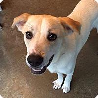 Adopt A Pet :: Finn - Manchester, NH