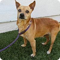Adopt A Pet :: Maurice - Hawthorne, CA