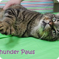 Adopt A Pet :: Thunder Paws - Bucyrus, OH