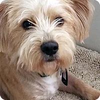 Adopt A Pet :: Harry - Sugar Grove, IL