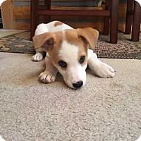 Adopt A Pet :: Joan Jett - Denver, CO