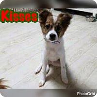 Adopt A Pet :: Kisses - Smithtown, NY