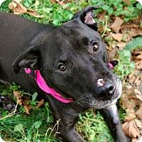 Adopt A Pet :: Tasha - Long Beach, NY