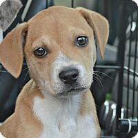 Adopt A Pet :: Bambi~adopted! - Glastonbury, CT