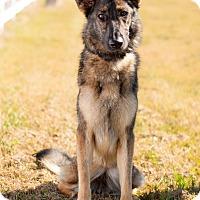 Adopt A Pet :: Sky - Dacula, GA