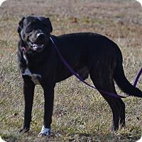 Adopt A Pet :: Toby - Lebanon, MO