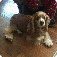 Adopt A Pet :: Emerson 12yr - Mentor, OH