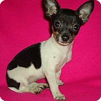 Adopt A Pet :: Macy - Staunton, VA