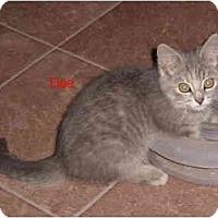 Adopt A Pet :: Doe - Albany, NY