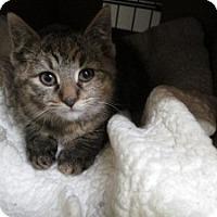Adopt A Pet :: Cindy - Island Park, NY