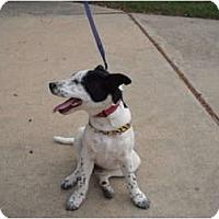 Adopt A Pet :: Millie - Russellville, AR
