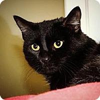 Adopt A Pet :: Serena - Cheyenne, WY